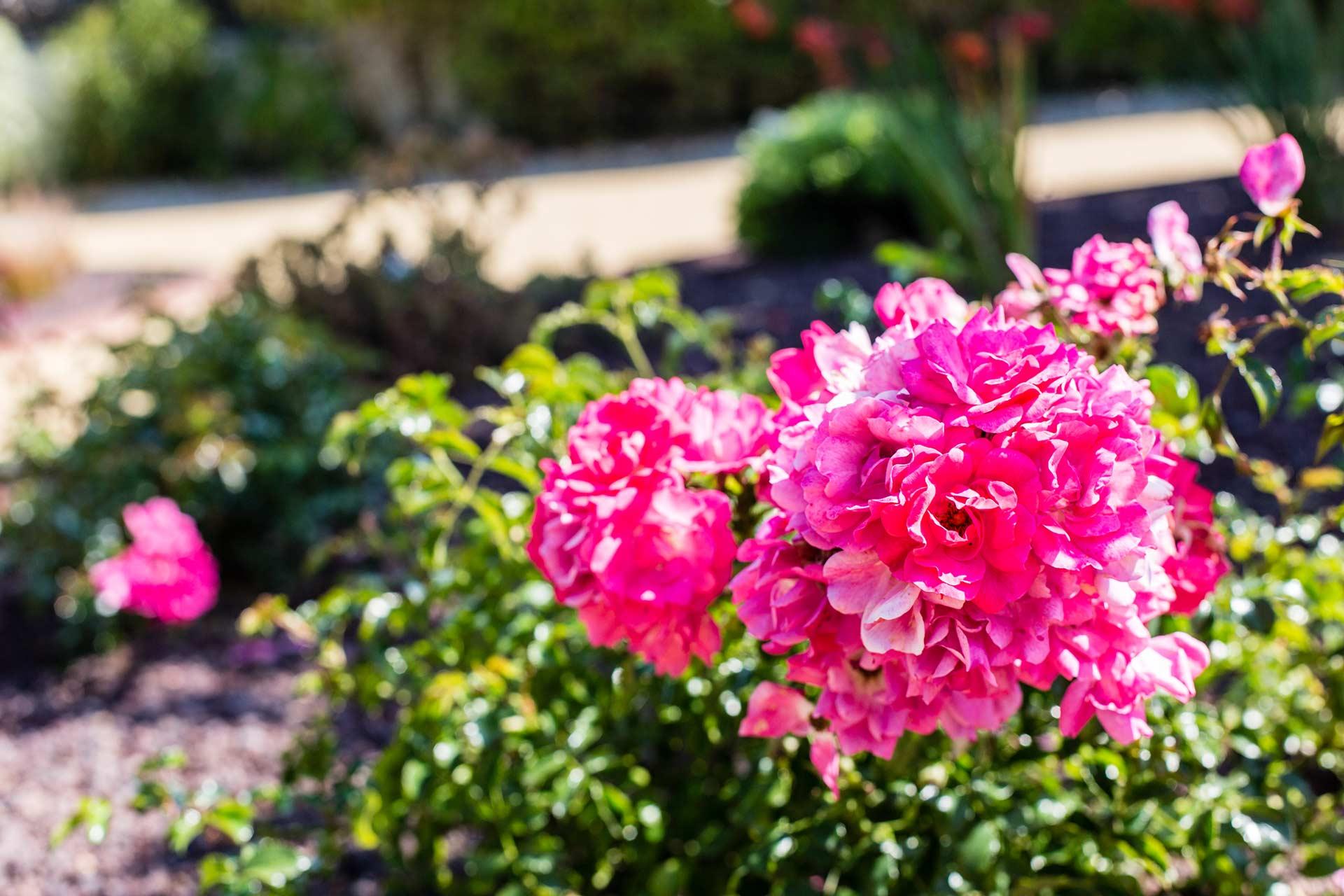 ManuPaysage - Fleurs et jardins emmanuel loirat paysagiste herbignac