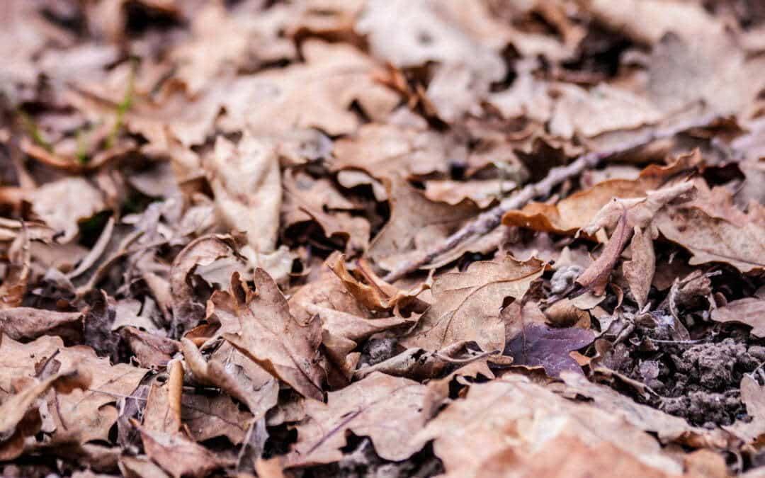 L'automne est arrivé dans vos jardins